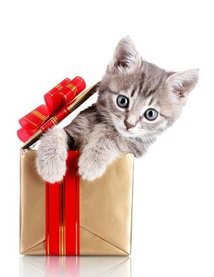 petit chat drôle dans une boîte